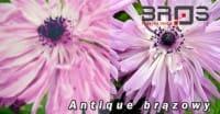 ornament-ANTIQUE-BRĄZOWY