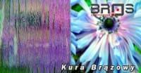 ornament-KURA-BRĄZOWY